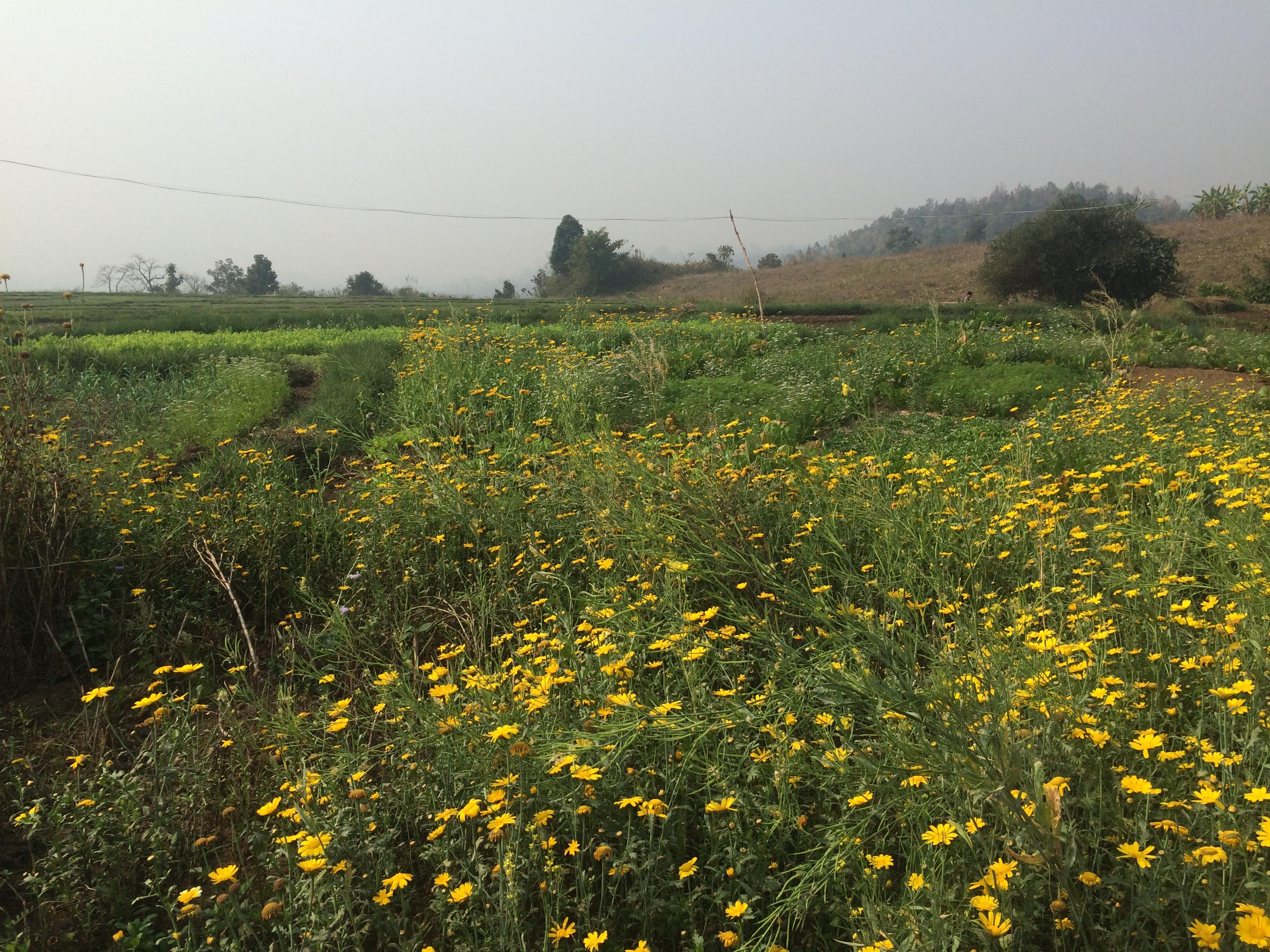 hsipaw trek Birmanie 1 JOUR A
